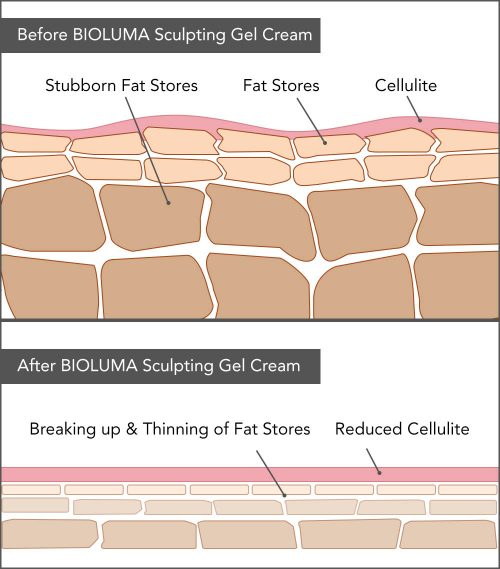 weight loss, fat burn, shred fat diagram