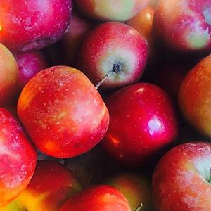 Pyrus Malus Fruit